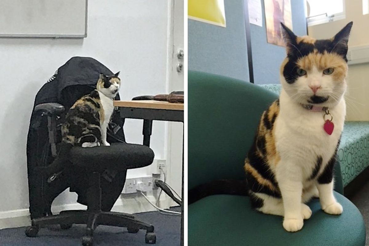 """Calico Cat Becomes Students' Favorite """"Lecturer"""" at a University and Brings Everyone Smiles"""
