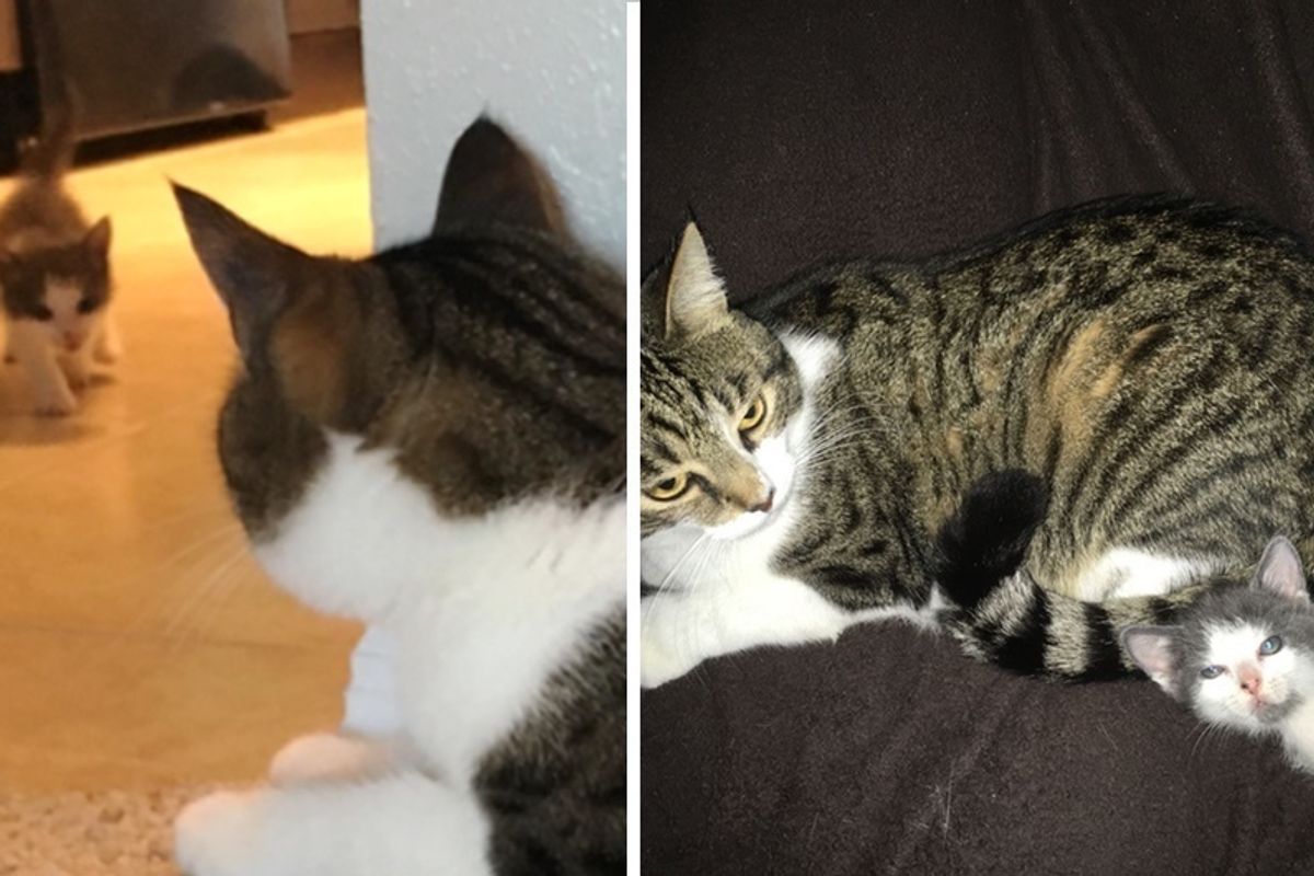 Kitten Saved After Storm, Finds Love in Older Cat and Won't Let Him Go, Now 4 Months Later.