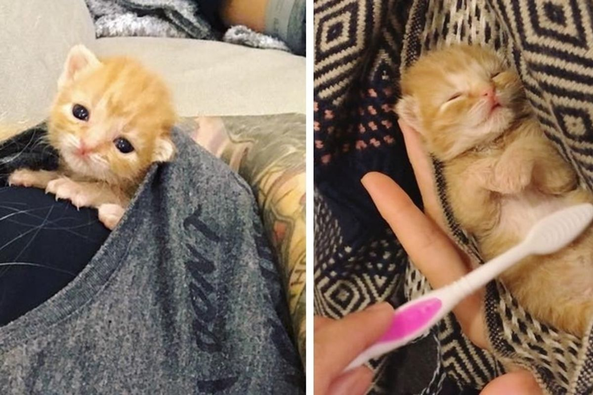Kitten Brought into a Store, Meows for Help and Gets Rescued Just in Time, Now 2 Months Later.