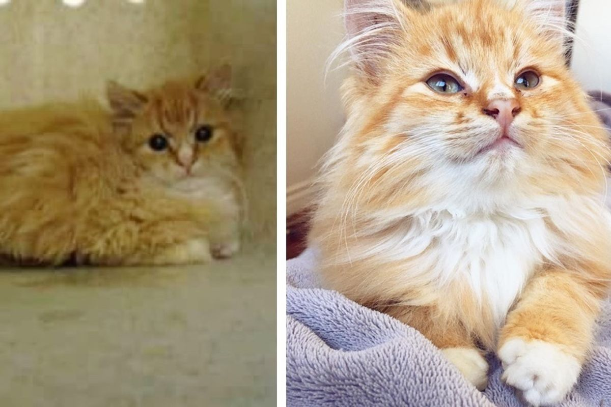 "Man Saves Kitten Who Was Deemed ""Too Feral"" and Discovers What a Lovebug He is!"