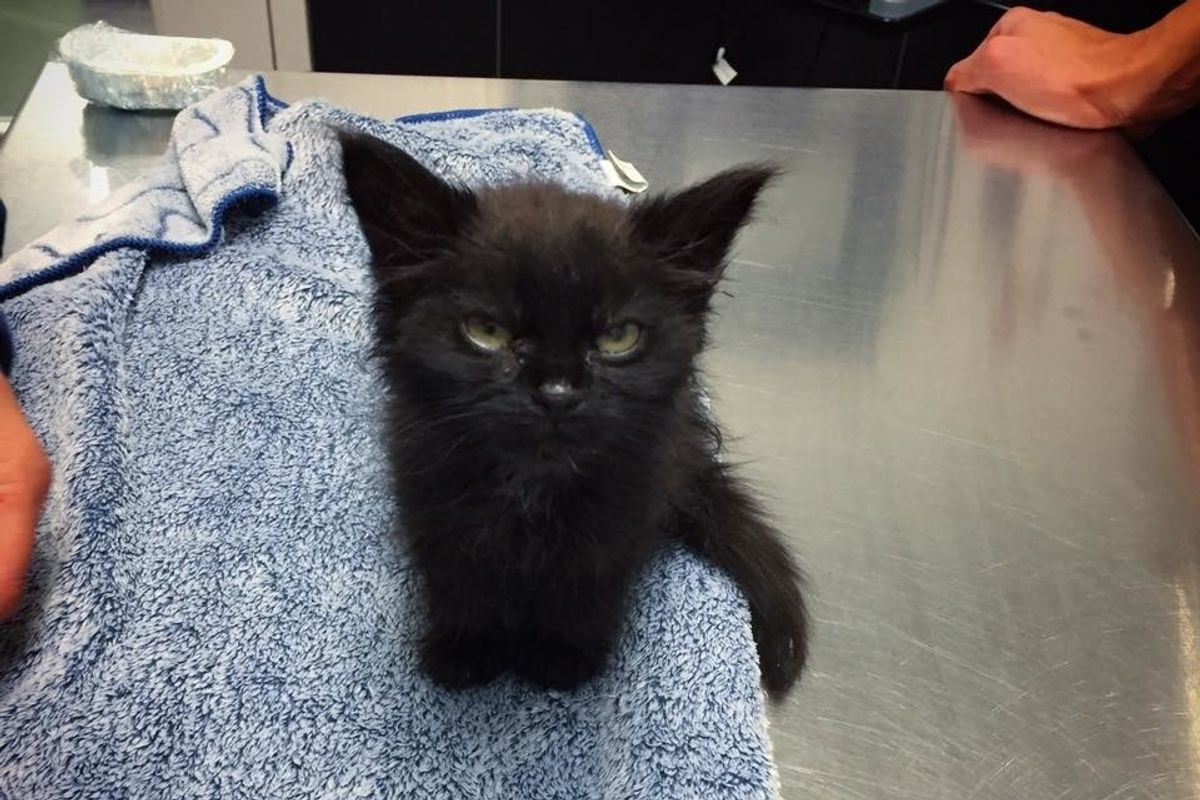 Kitten Couldn't Grow Until a Woman Took a Chance on Her and Turned Her Life Around.