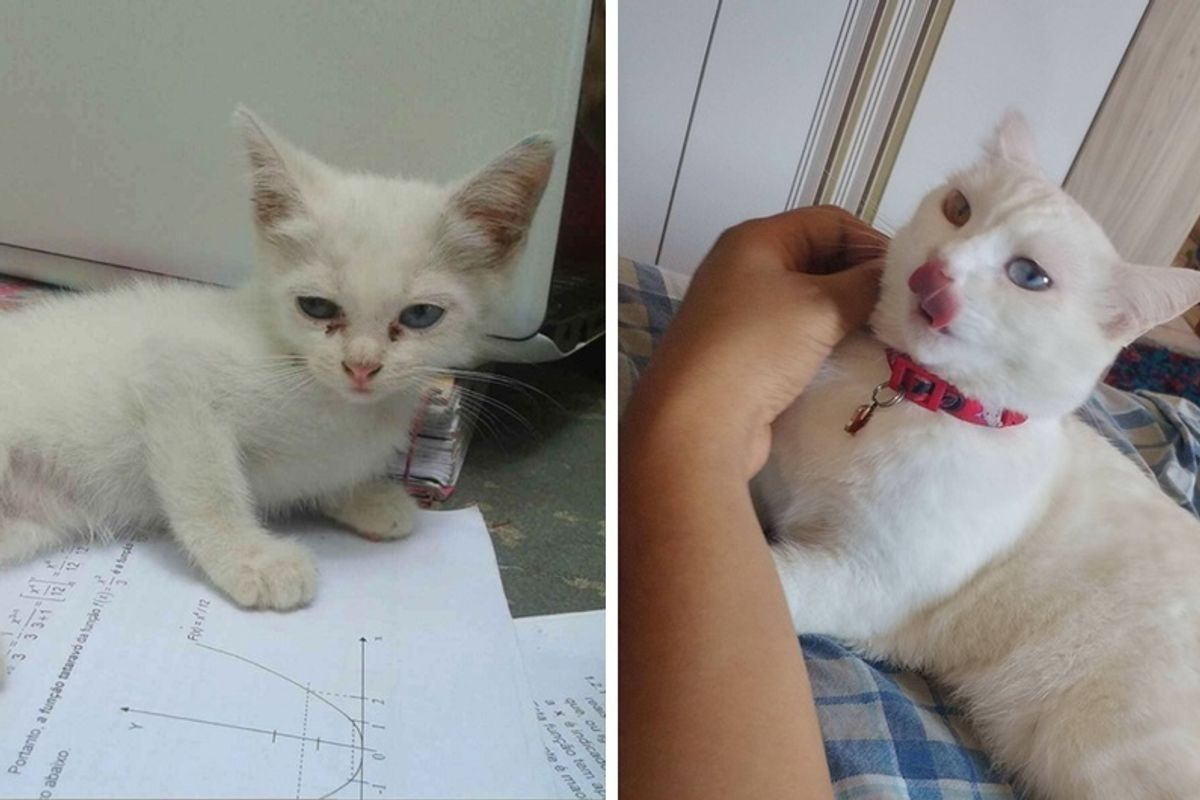 "Stray Kitten Walked Up To Young Man and Decided to Be His ""Study Buddy"", Now 2 Years Later."