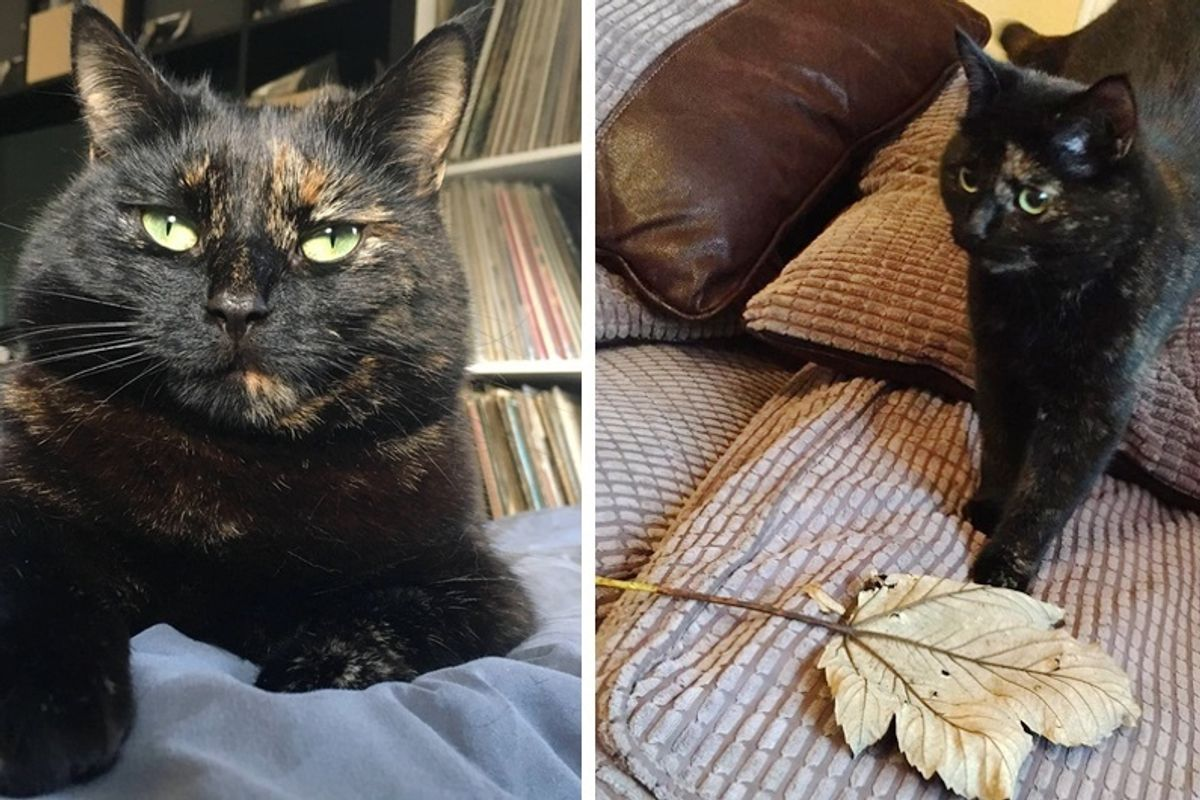 Cat Brings Her Human Giant Leaf Every Morning as Gift After Realizing What He Doesn't Like.