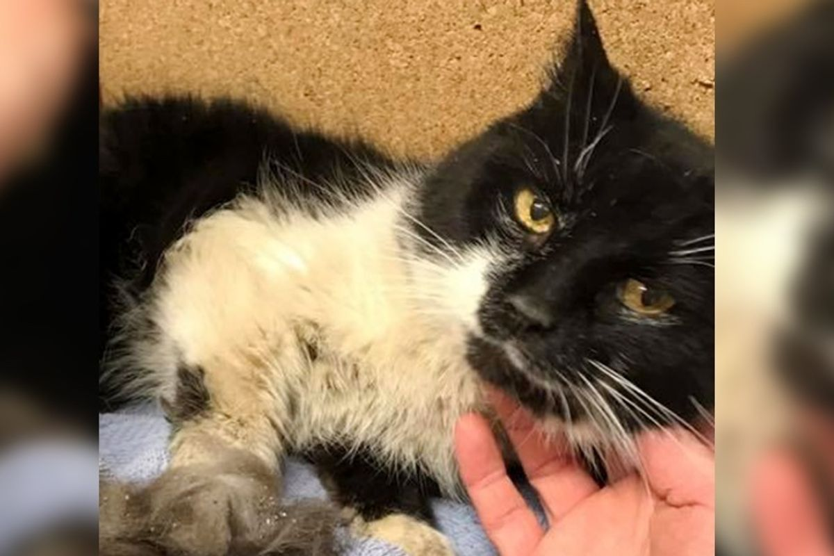 Cat Lived 17 Years In Neglect Finds Someone She Loves and Won't Let Go.