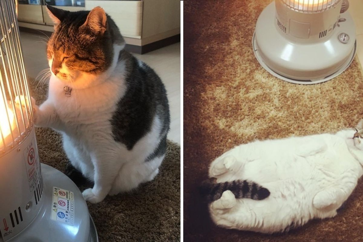 Cat Falls Asleep to Warmth of a Heater Every Day During Winter in These Adorable Photos.