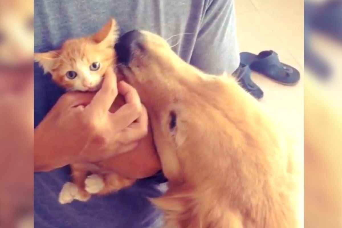 Dog Adopts Street Kitten As Her Own and Raises Him To be the Happiest Cat.