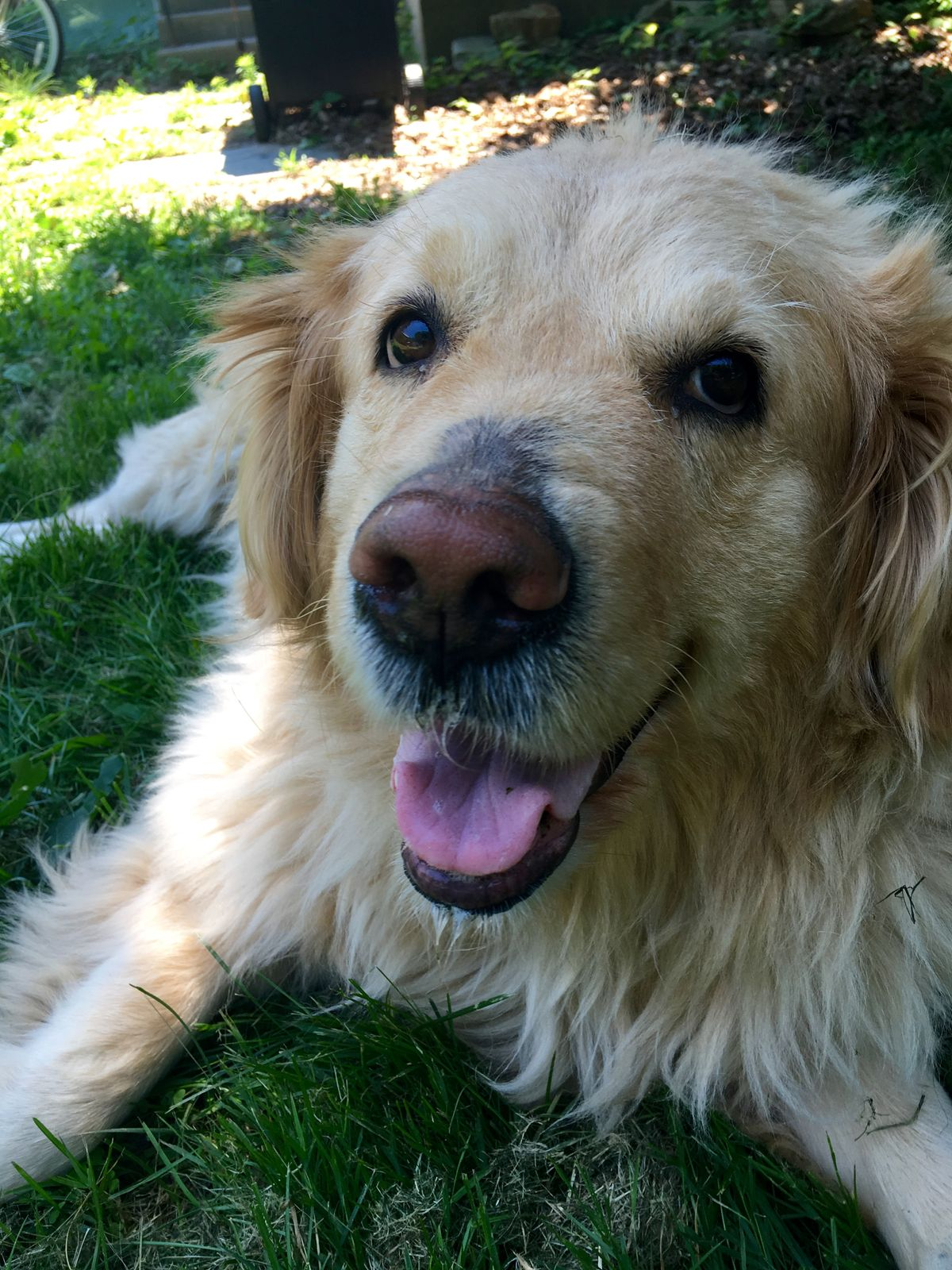 A Letter To My Dog In Heaven