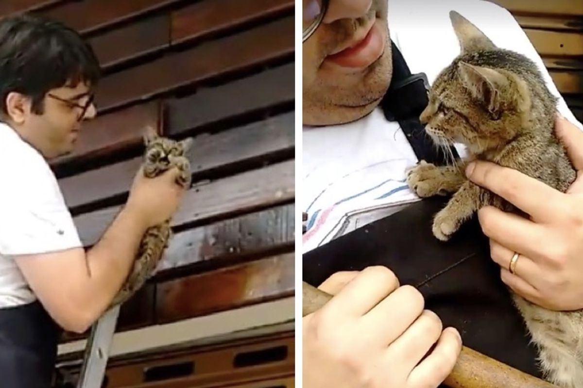 Man Saves Kitten Trapped Inside Store Facade and Knows Just the Right Home for Him