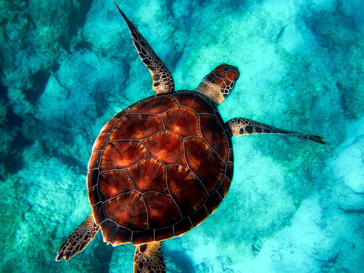 If You Don't Already, Start Caring About Sea Turtles