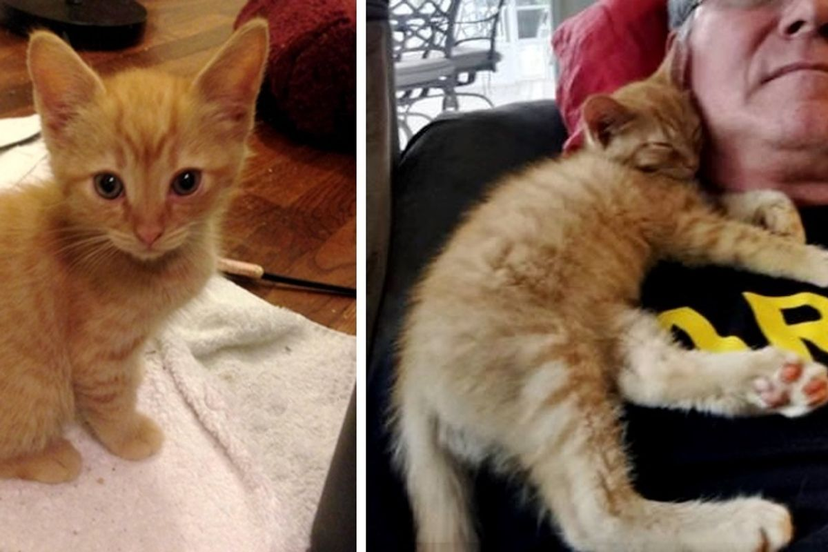 Kitten Changed Man Who Didn't Like Cats and Guided Him To Find His Purrfect Kitty.