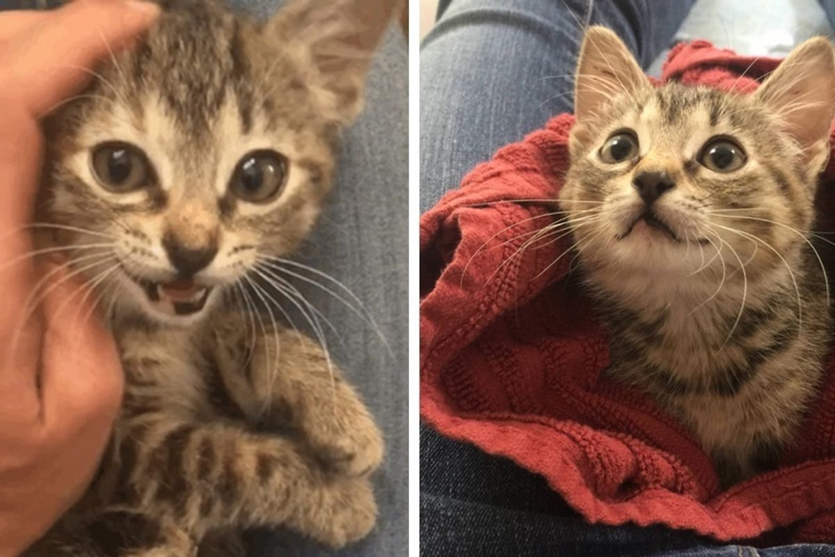 Tripod Cat Abandoned Outside Shelter Was Terrified Until She Found Someone She Loves.