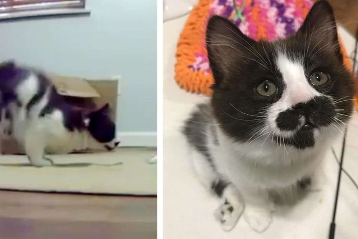 2 Kitten Siblings Born with Perfectly Imperfect Legs, Let Nothing Slow Them Down.