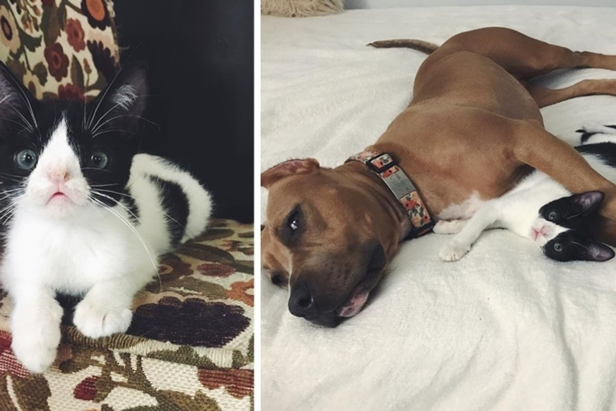 Kitten Born Special Gets a Second Chance and Finds Dog Buddy to Cuddle with Every Day.