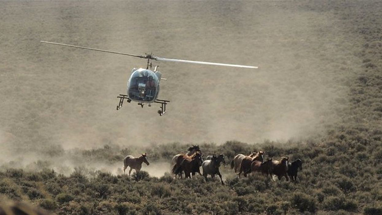 Trump Budget Sells Out Wild Horses Again