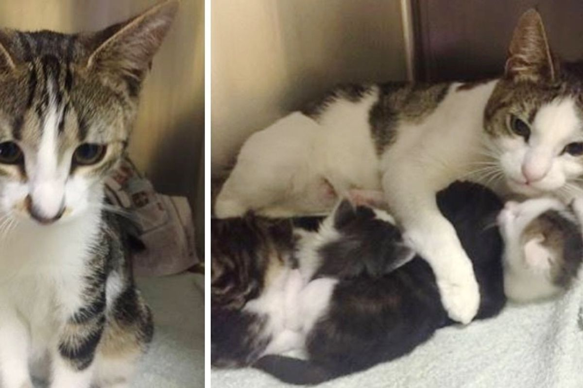 Mom and Dad Cats Found With Their Kittens Abandoned in a Park - Cuddling and Keeping Their Babies Safe.