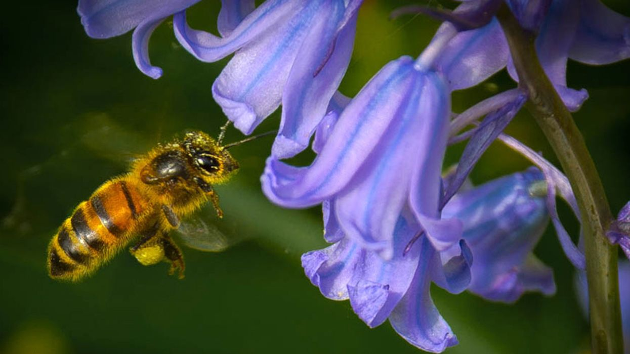 Conservation Groups, House Reps Call for EPA to Respect Science, Take Action on Pollinator-Killing Pesticides