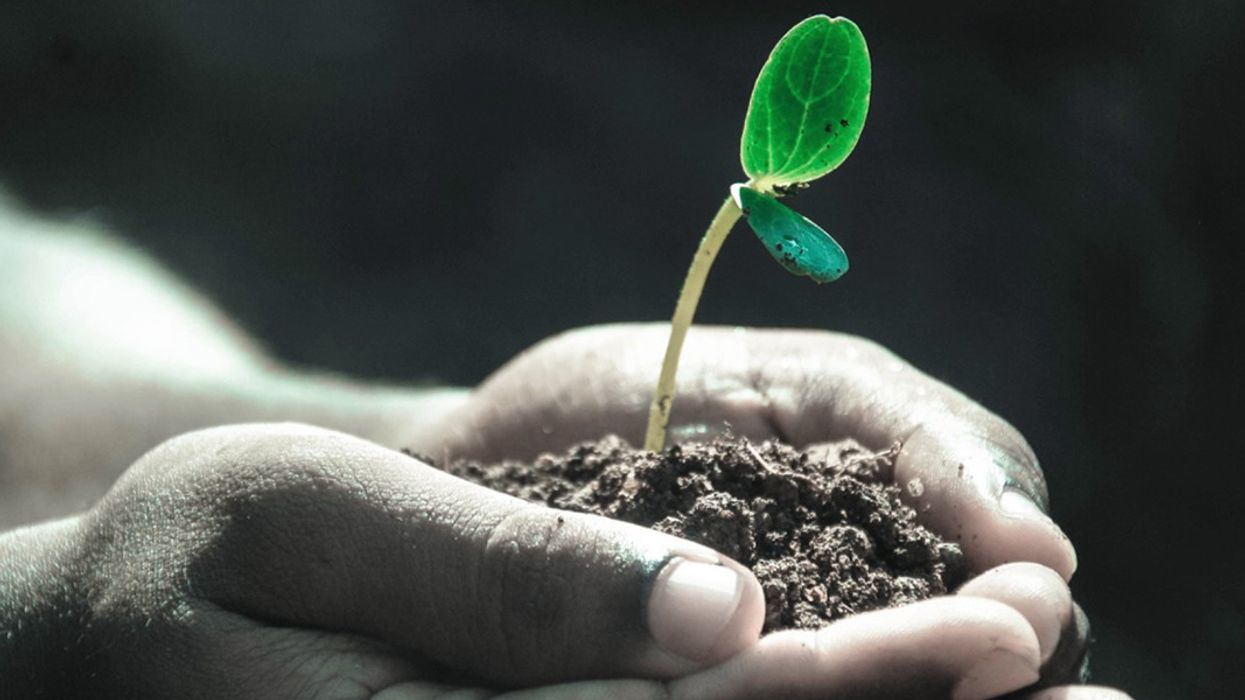 'The Dirt Cure': Why Human Health Depends on Soil Health