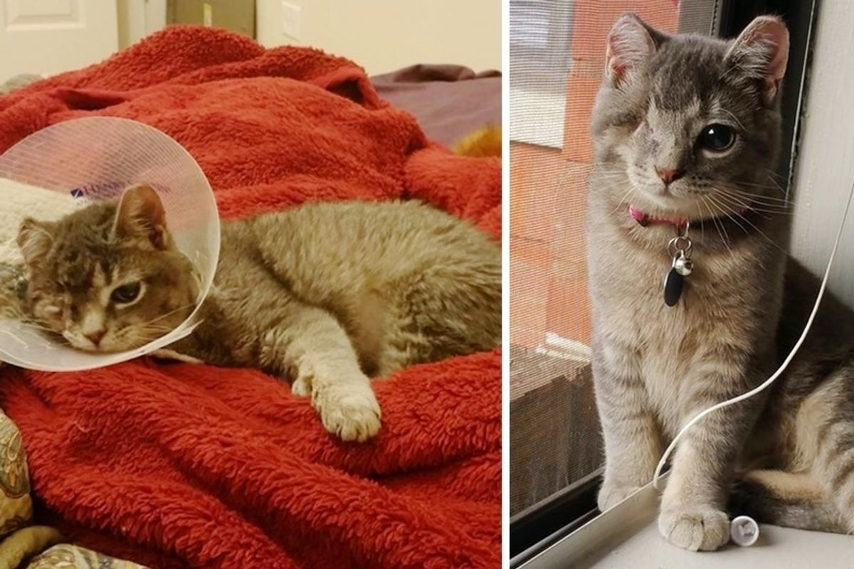 Scaredy Cat Saved From a Tree During Storm, Lost an Eye but Found Someone She Loves.
