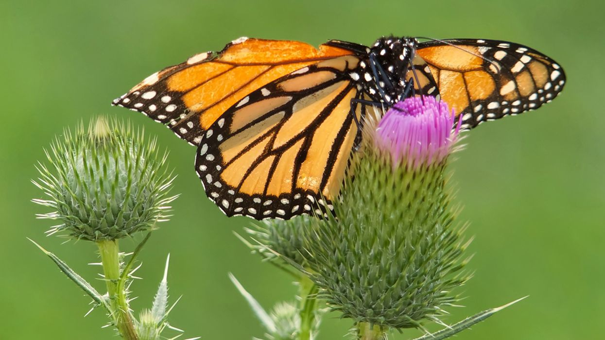 Groundbreaking 'Airbnb for Butterflies' Now Open for Business, Donations