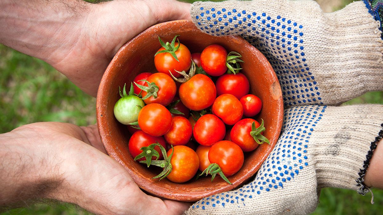 Spring Into Action: 6 Tips for Climate-Smart Gardening