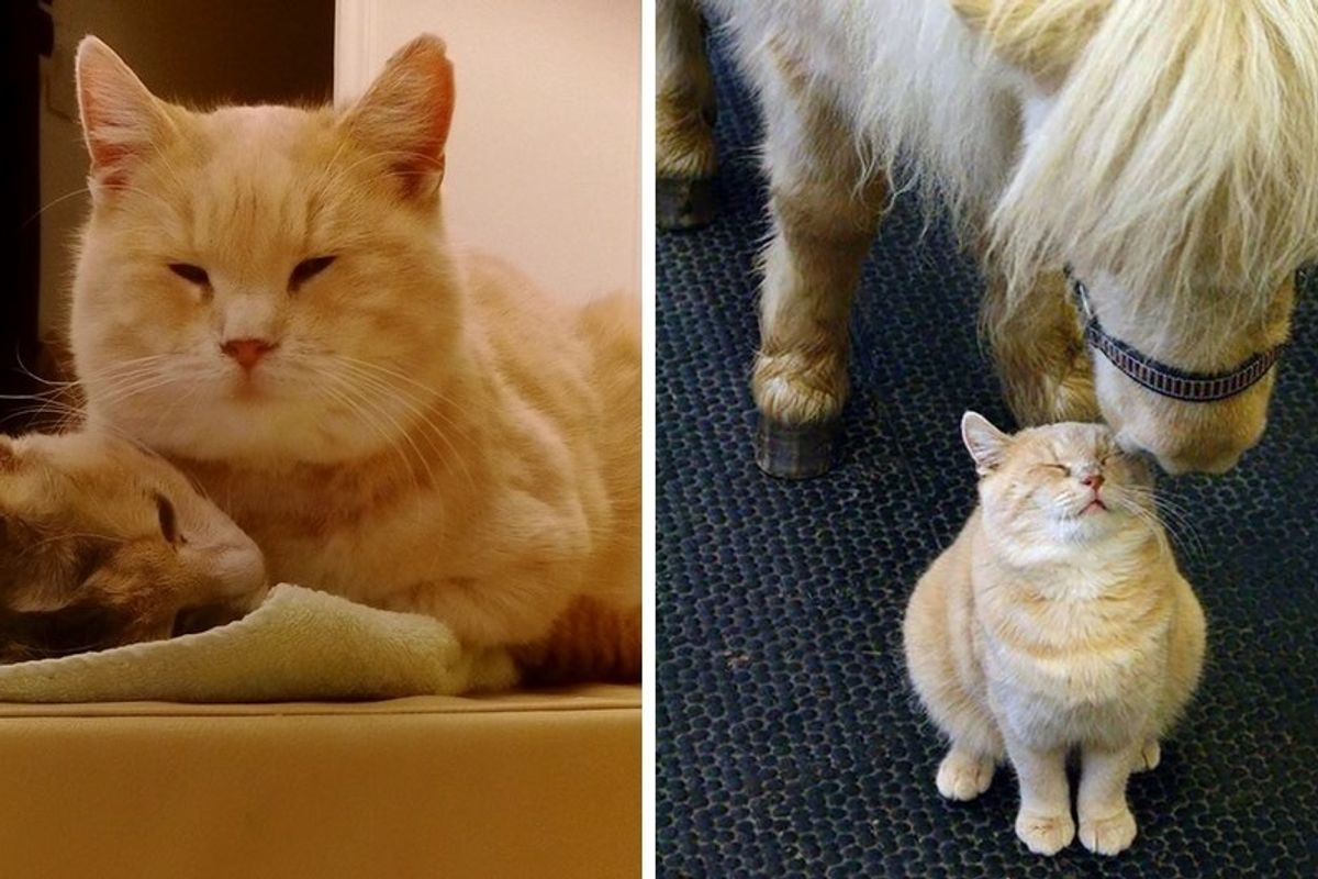 Clinic Cat Asked to Leave Her Home, Cat Lovers Band Together to Help Bring Her Back