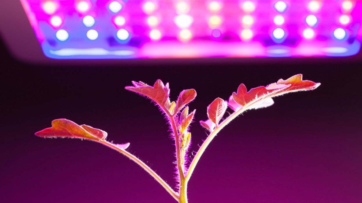 Grow Lights for Indoor Plants and Indoor Gardening: An Overview