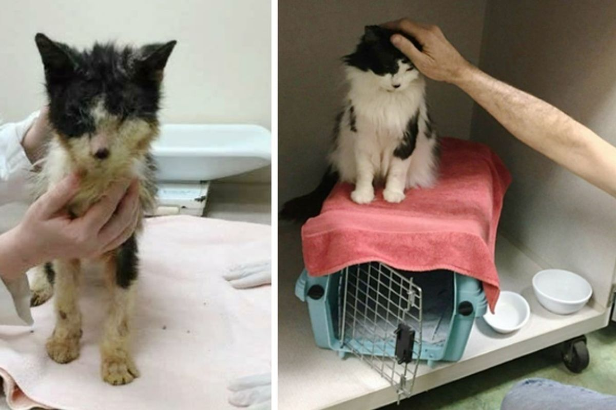 Cat Lived Most His Life in a Carrier, Gets Help to See and Finds Someone to Love.