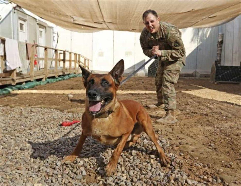 A Brief History Of Dogs In Warfare