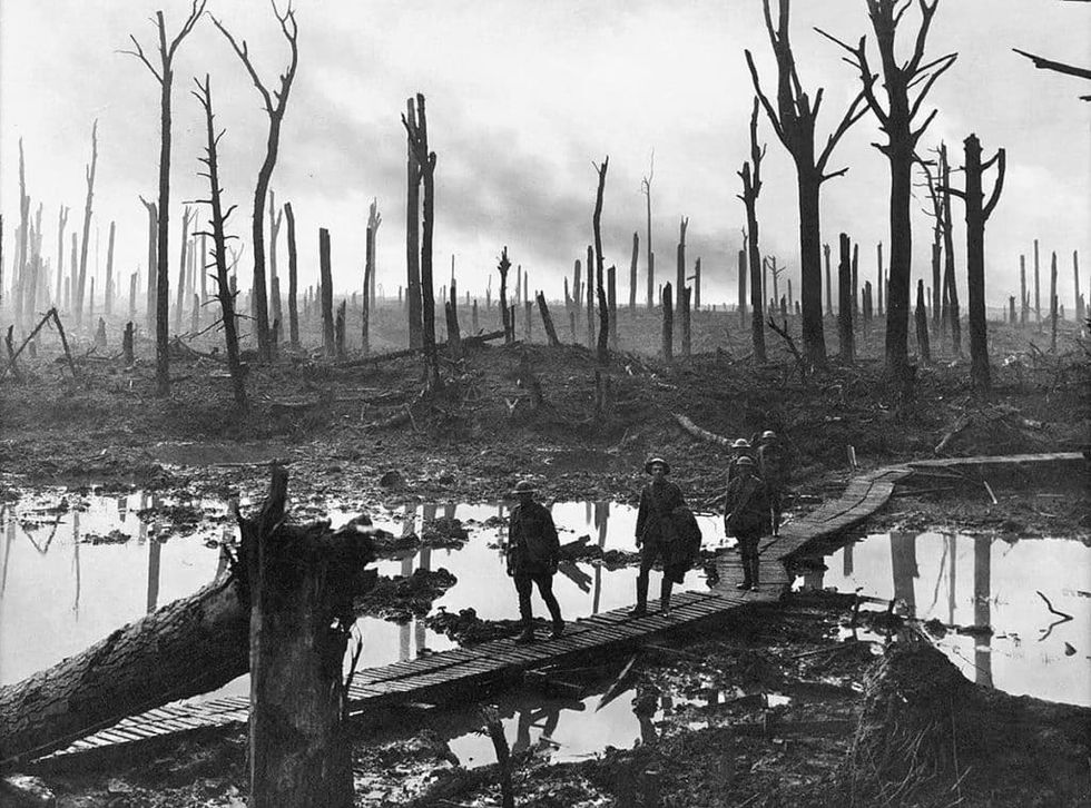 British troops in World War I used miracle moss for bandages