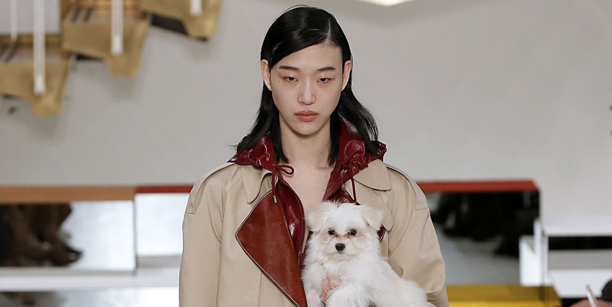 Do Puppies Instantly Elevate a Look?