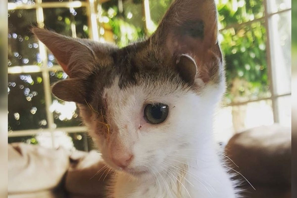 Kitten with 4 Ears and One Eye Rescued From Under a House, Finds Someone He Loves.