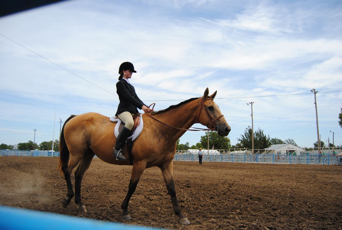 To My Childhood Horse, Because It's Not Just People Who Have Big Impacts On Our Lives