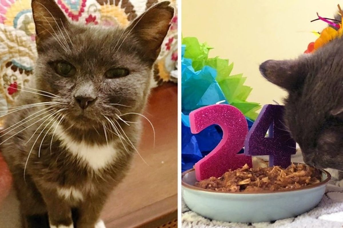 Super Senior Cat Turns 24, One Year After She Was Rescued From Shelter.