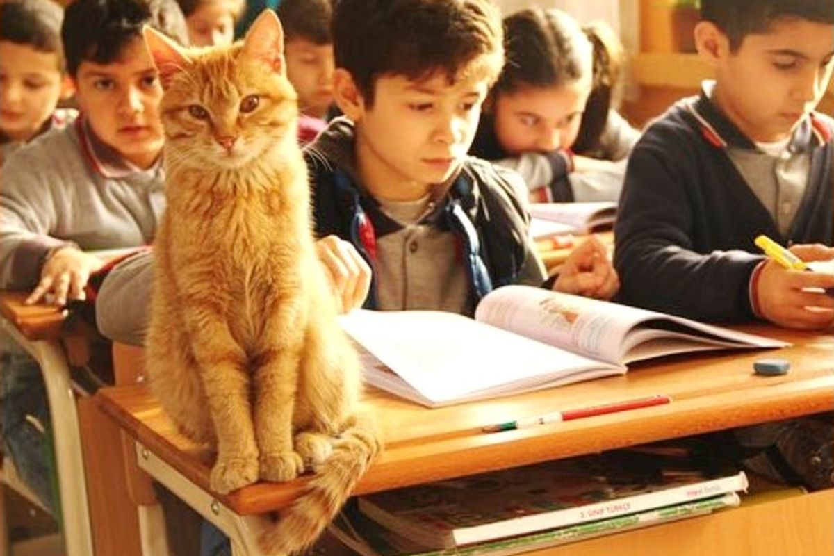 """Stray Cat Wanders Into School Classroom and Decides to """"Help"""" and Make the Place His Home."""