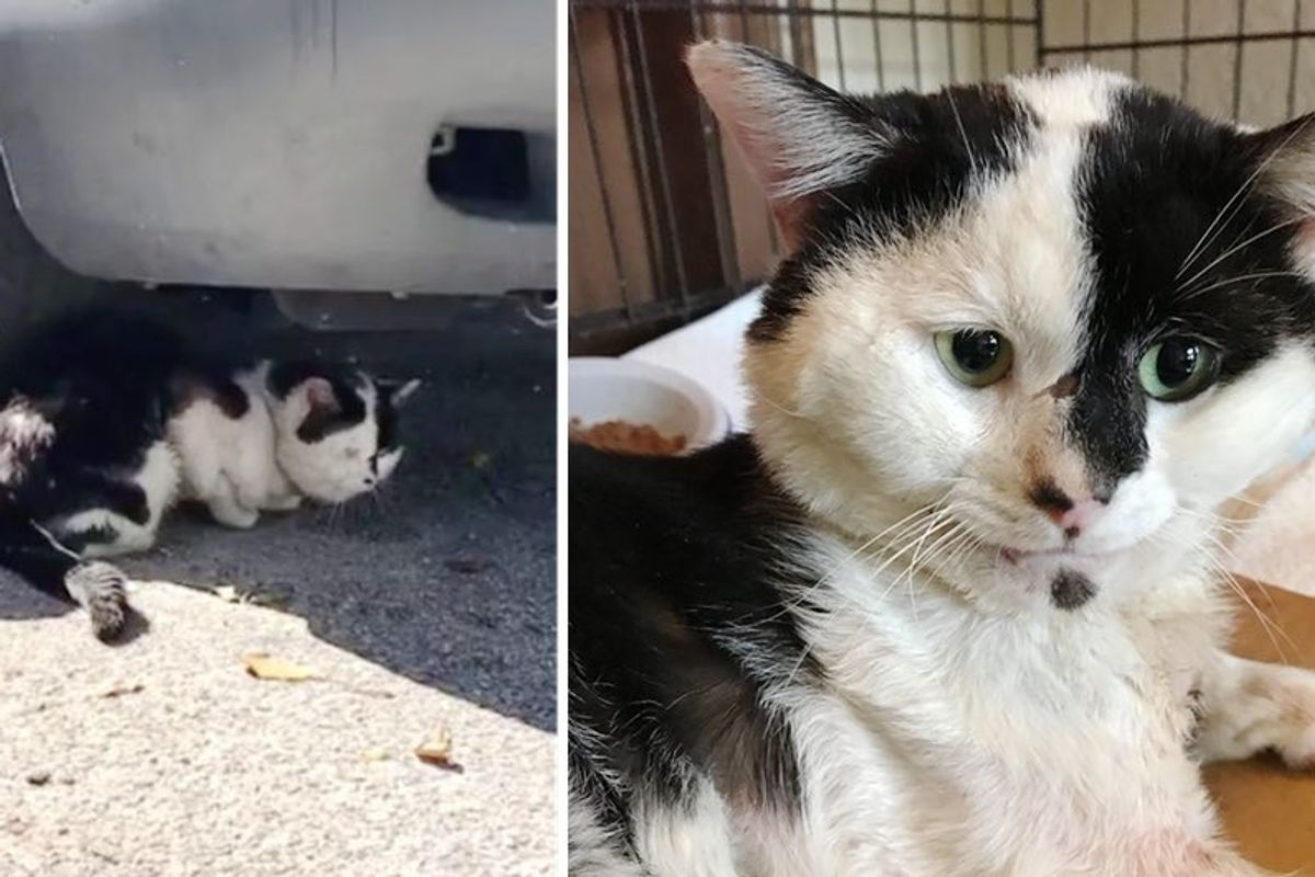 Woman Found Cat Meowing Under a Car at Mobile Home Park and Couldn't Leave Him There.