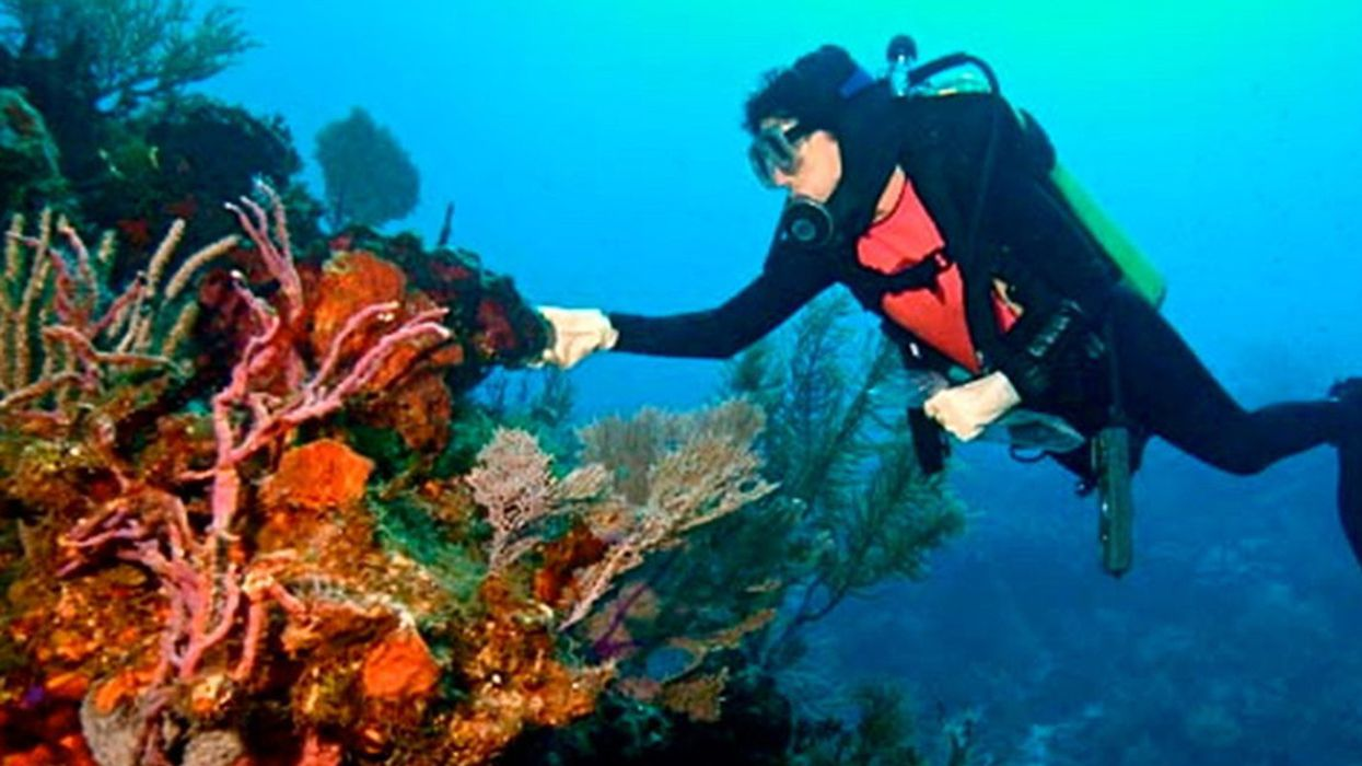 Deep-Sea Coral Ecosystems May Hold Cancer Cures, But They Face Threats