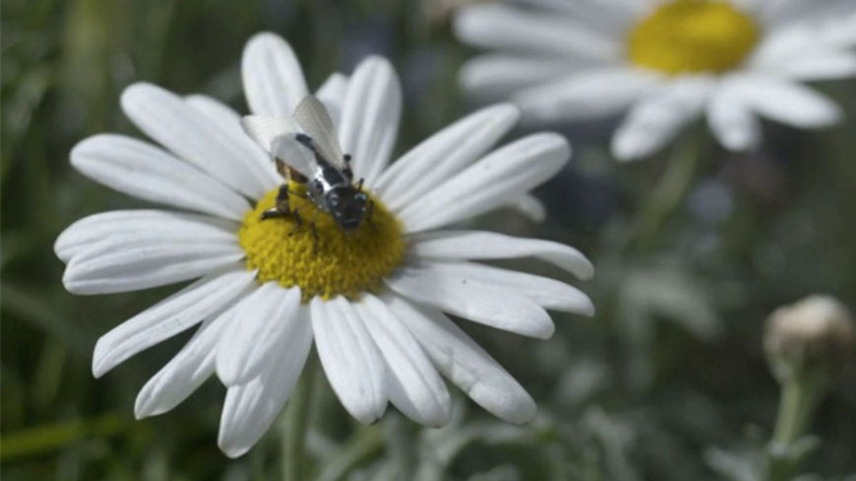 Walmart Files Patent for Robot Bees