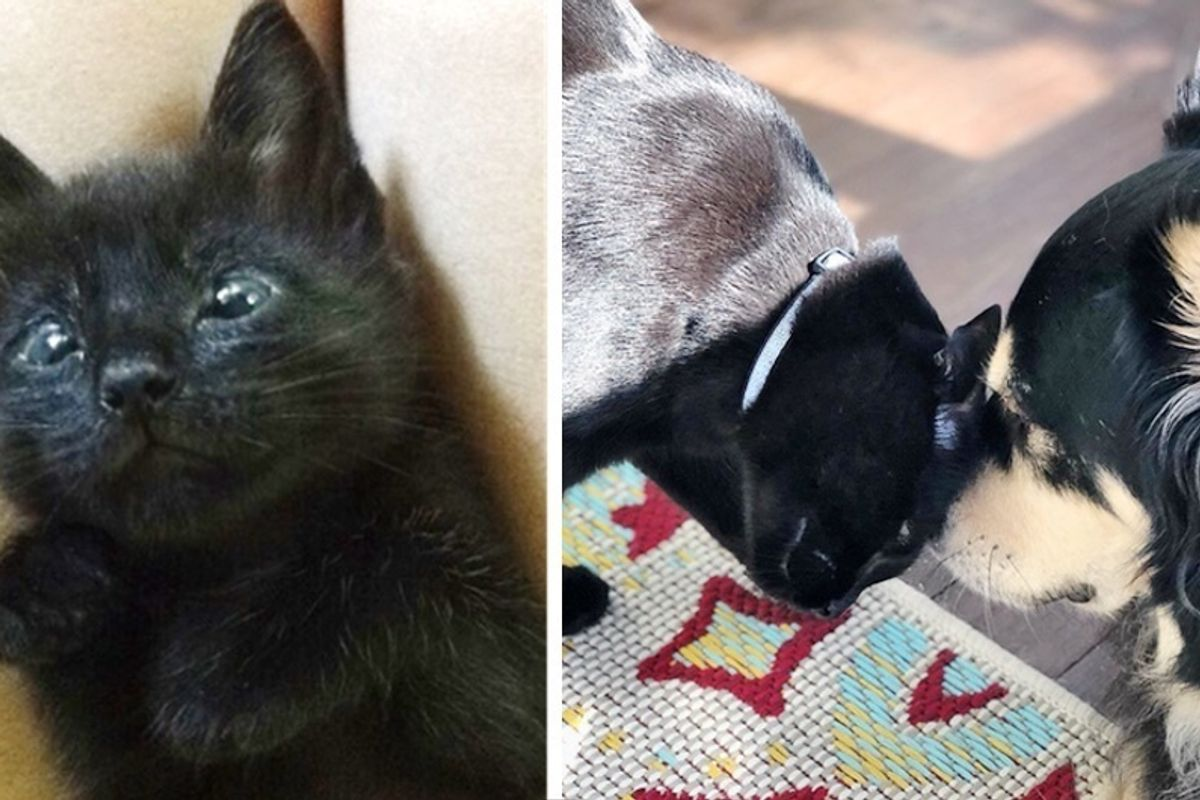 Kitten Who Can't Close His Eyes, Finds Comfort and Healing Power in a Dog.