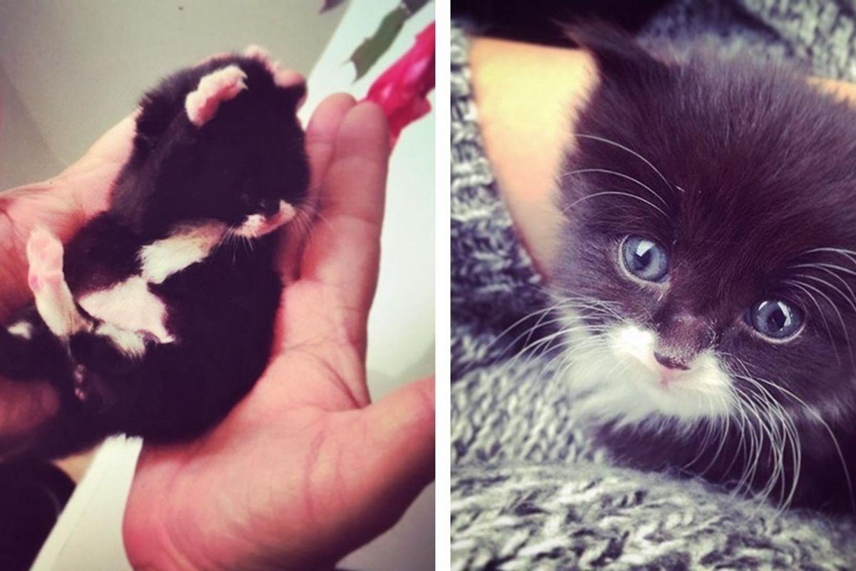 Woman Didn't Plan to Get a Pet But Found a Motherless Kitten Under Her House.