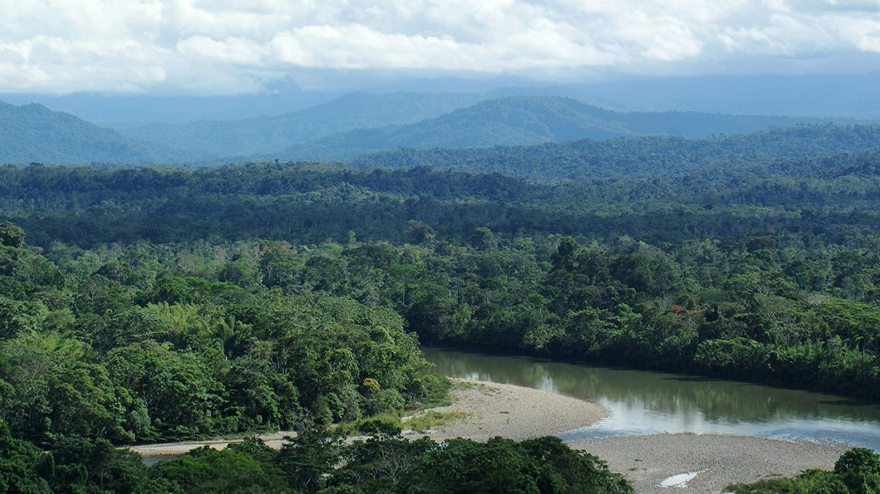 Earth's Intact Forests Are Invaluable, and in Danger
