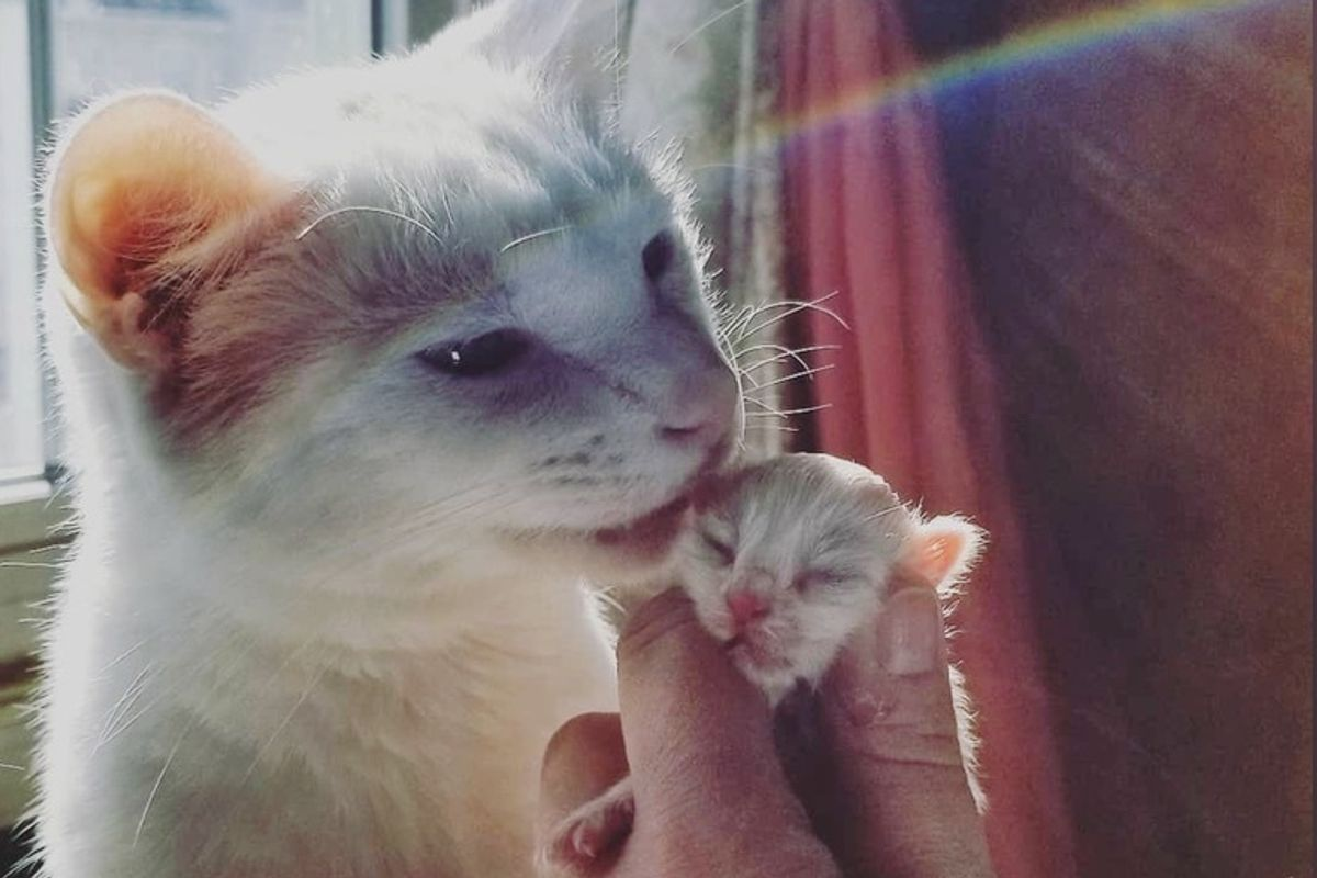 Cat Becomes Surrogate Dad to Newborn Kitten and Helps Save Her Life