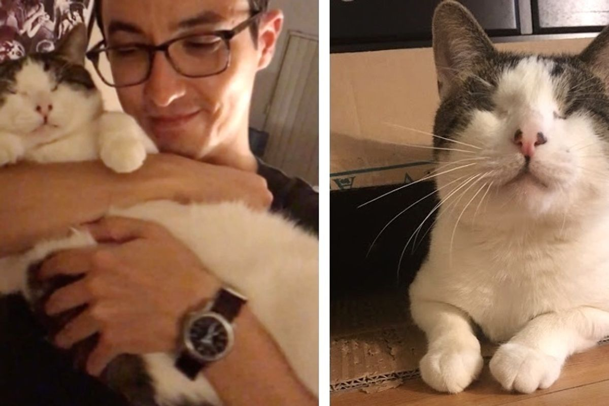 Cat Born Without Normal Eyes, Met a Couple He Loves - They Couldn't Stop Thinking About Him.