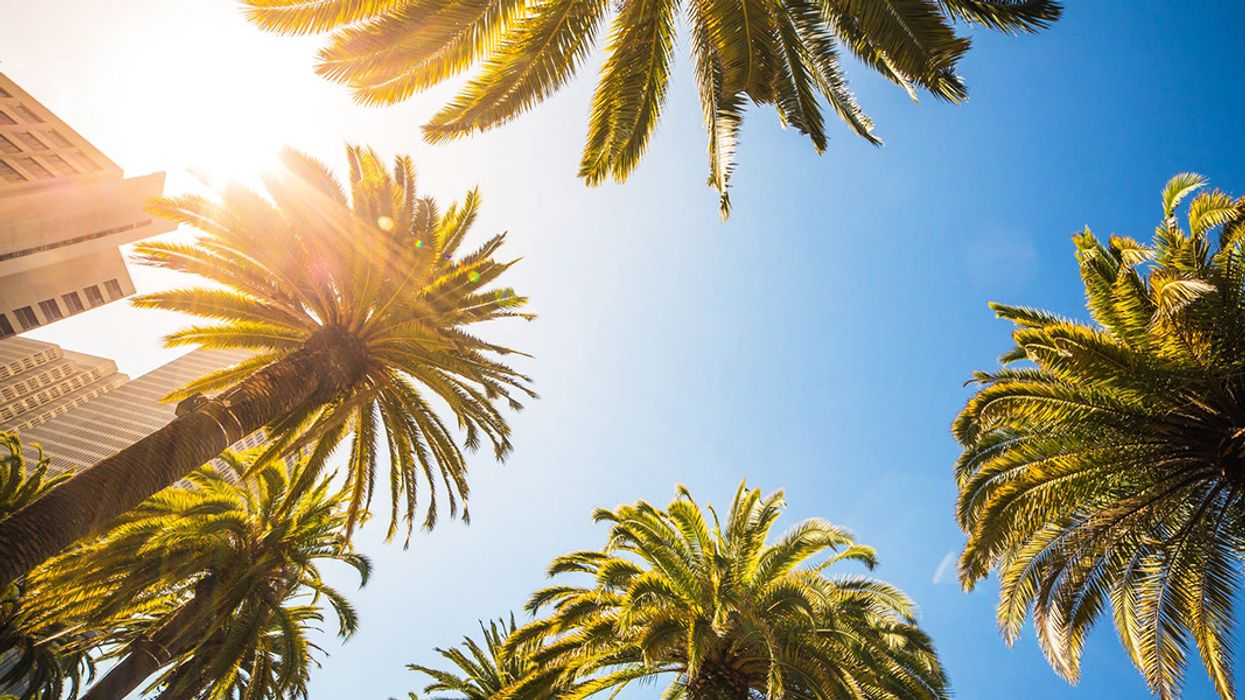 Will Climate Change Make Your Hometown Full of Palm Trees?