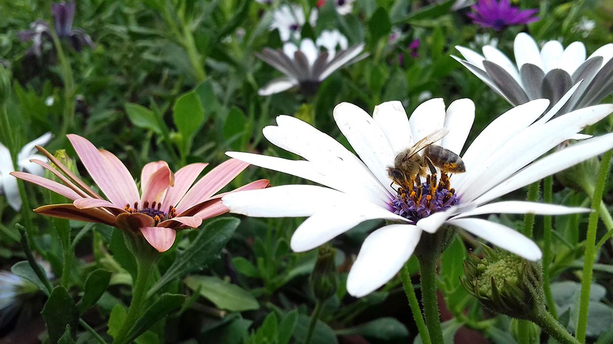 Study Shows Some Pesticides More Bee-Safe Than Others, But Are Any Pesticides Eco-Friendly?
