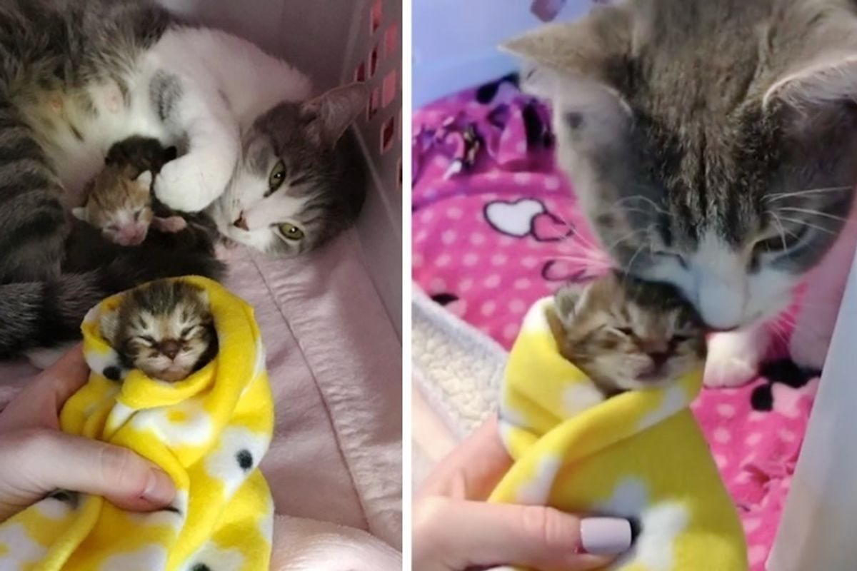 Cat Mom Found as Stray Won't Leave Her Kittens Until She Finds Someone She Trusts