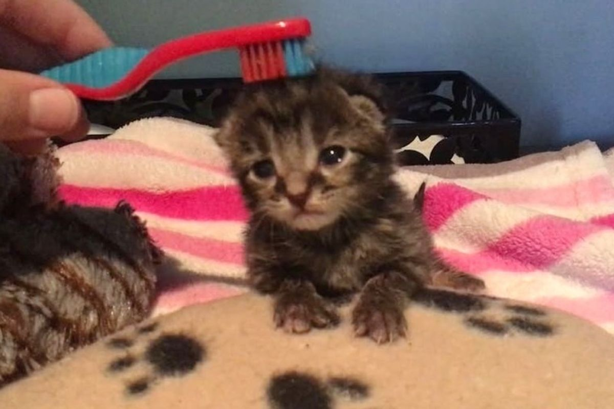 Tiny Kitten, the Only Survivor of His Litter, Gets a Second Chance and Can't Stop Purring.