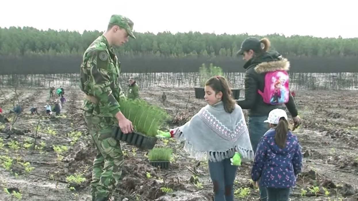 Volunteers Plant 67,500 Trees in Portuguese Forest Devastated by Wildfires
