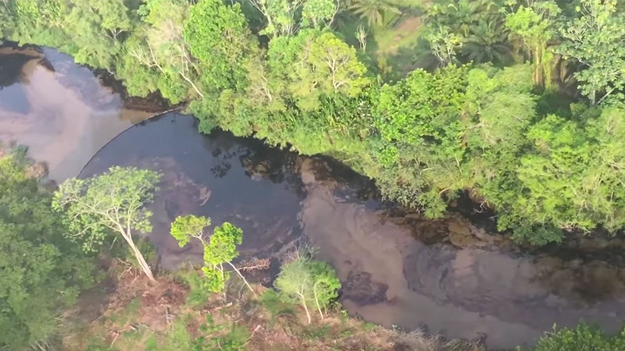 More Than 2,400 Animals Killed by Oil Spill in Colombia