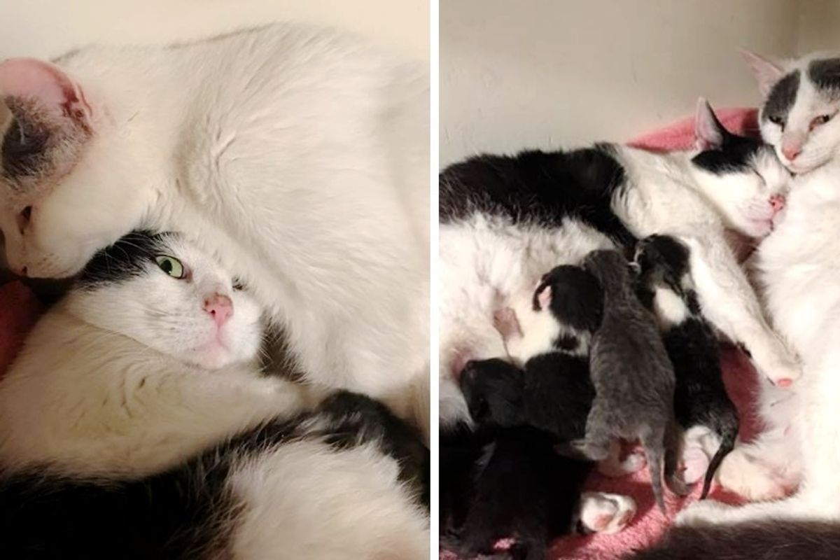 Shelter Cat Gets Comfort and Support From Another Cat When She Goes into Labor.