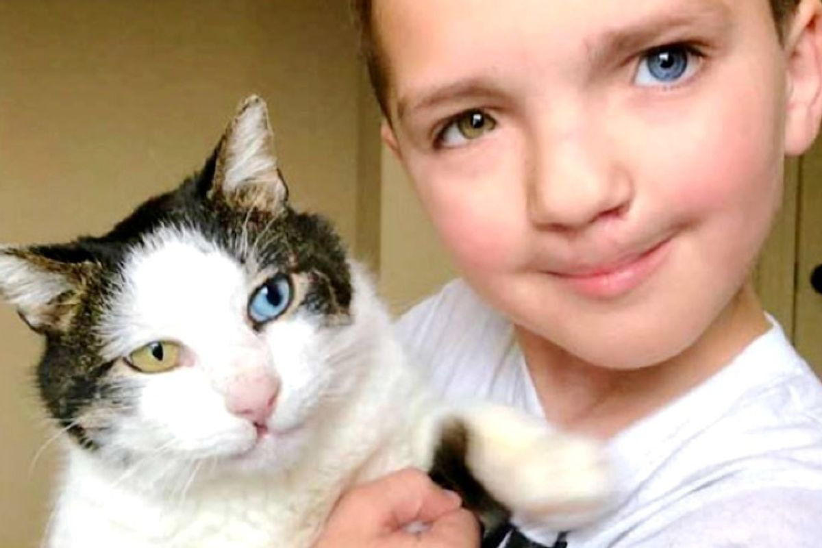 Boy Finds Rescue Cat with Different Colored Eyes and Cleft Lip Just Like Him.